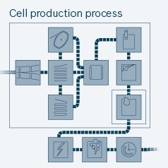 Cell production process
